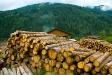 firewood_03
