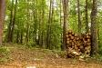 firewood_14