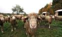 ramblers_way_farm_maine_02