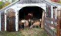 ramblers_way_farm_maine_12