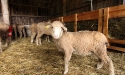 ramblers_way_farm_maine_18