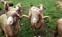 ramblers_way_farm_maine_20